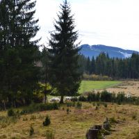 Weidewiese-der-Moorschnucken_S-Heiss